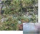 Приложение за парници,оранжерии чрез мъглуване